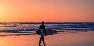 Delfines en la playas de california - NDV