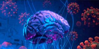 coronavirus en el cerebro