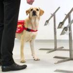 Perros podrían detectar coronavirus - noticiero de venezuela