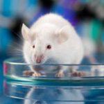 Ratones se curan de Parkinson- Noticiero de Venezuela