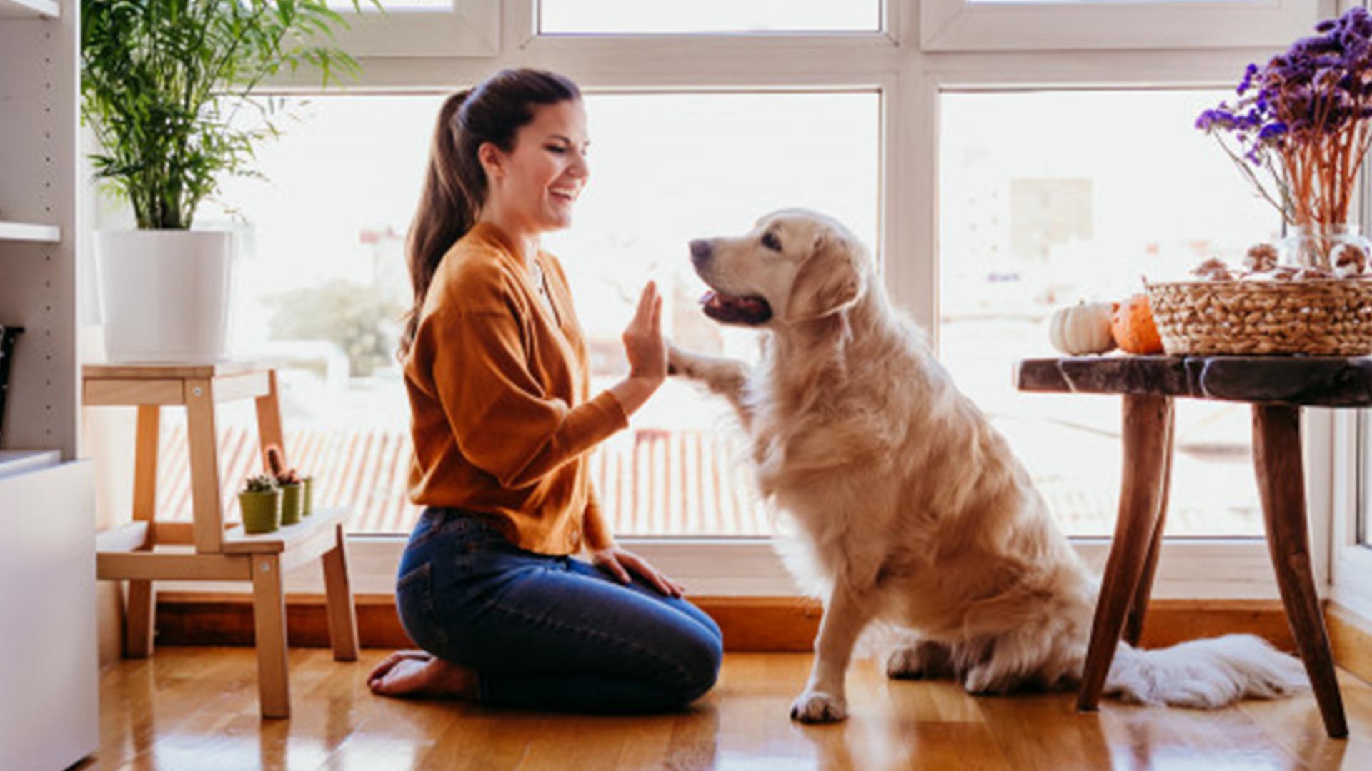 mi mejor amigo el perro - noticiero de venezuela