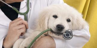 ¿Cómo cuidar a mi mascota? - noticiero de venezuela