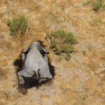 elefantes muertos en Botswana - Noticiero de Venezuela