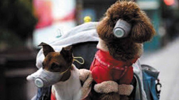 Detectar el coronavirus con perros - Noticiero de Venezuela