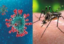 Inmunidad al coronavirus - Noticiero de Venezuela