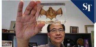 Biólogo busca el origen del covid-19