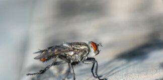 Cómo eliminar las moscas de tu casa - NDV