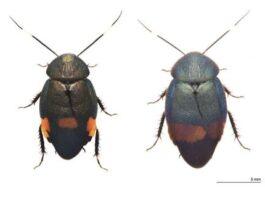 nuevas especies de cucaracha - NDV
