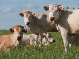 Diferencias reproductivas entre la Vaca y la Yegua