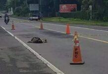 persona arrollada en la carretera Panamericana