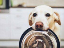 Alimentos dañinos para tu perro