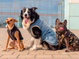 ¿Los perros pueden usar ropa?
