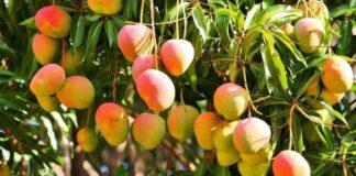 Frutas que puedes comer con cáscara