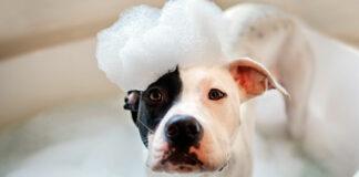 perro disfrute del baño