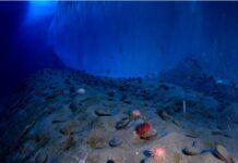 quinto océano en el planeta