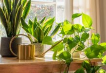 Las plantas de interior