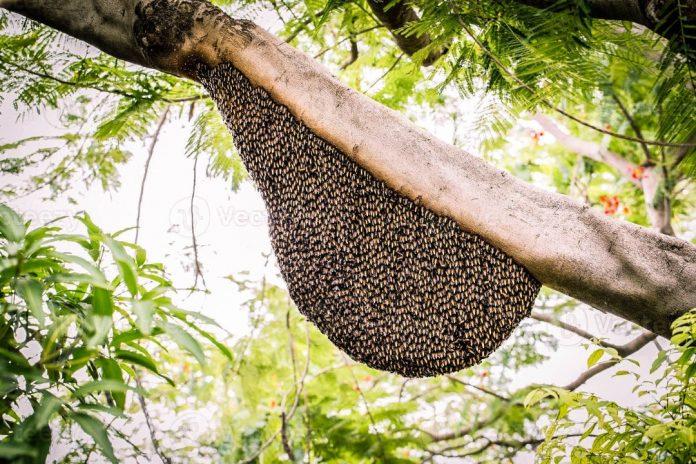 enjambres de abejas en el municipio Libertador