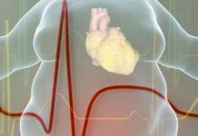 Cómo es el corazón de una persona obesa