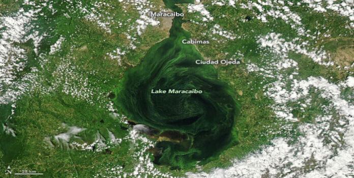lago de Maracaibo se está asfixiando