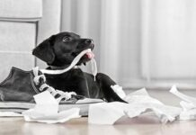 ¿Sabes por qué tu perro muerde todo?